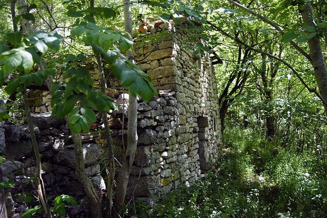 Free people abandoned houses old trees weed asturias
