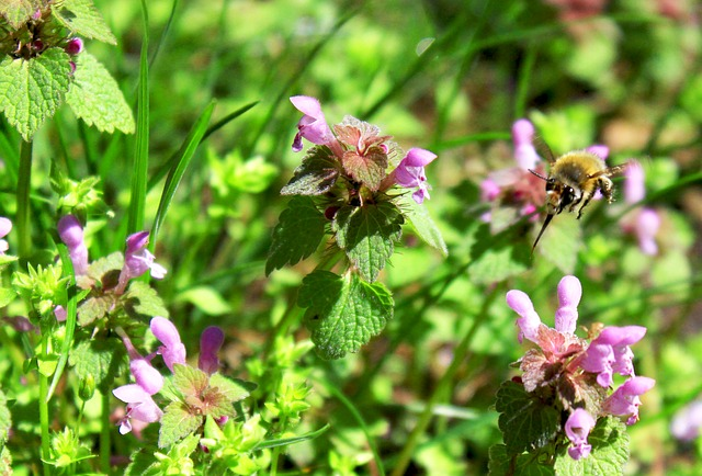 Free bee bees insect flower fly about honey hummel