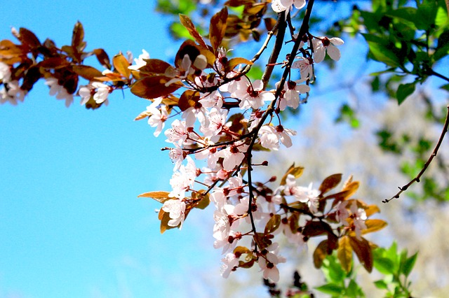 Free spring flower signs of spring garden