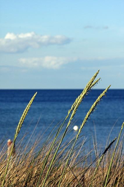 Free baltic sea beach clouds blue sky sea plant reed