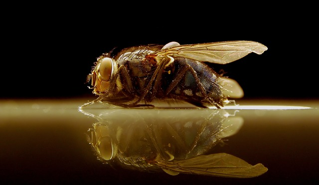 Free insect fly nature animal close