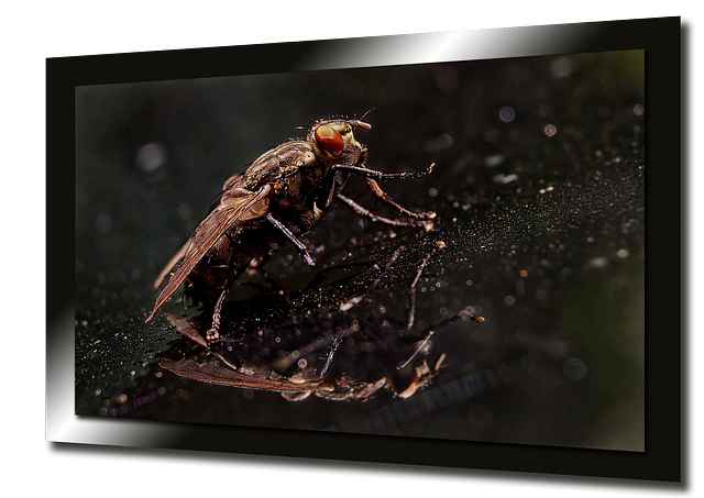 Free fly nature wing collage tv screen marko