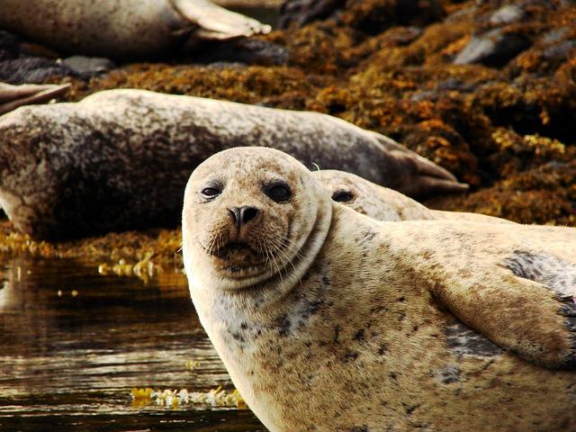 Free sea lion water sea lions head california sea lion
