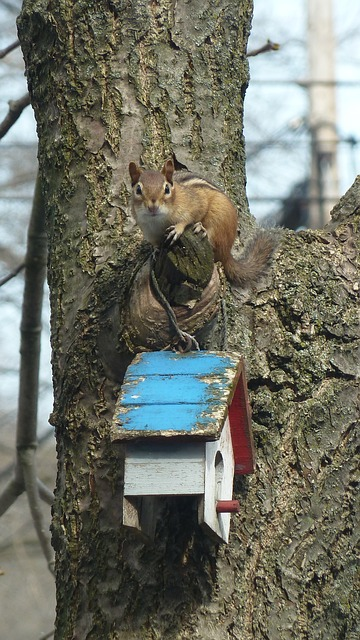 Free chipmunk nature animal wildlife mammal tree