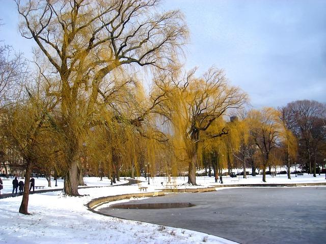 Free boston massachusetts park trees winter snow ice