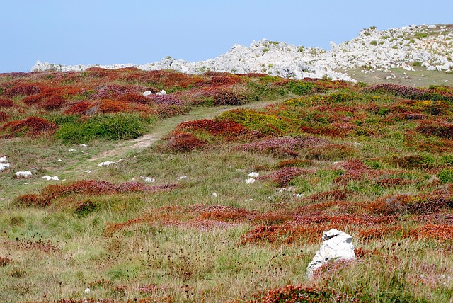 Free autumn prado grass plant nature field landscape
