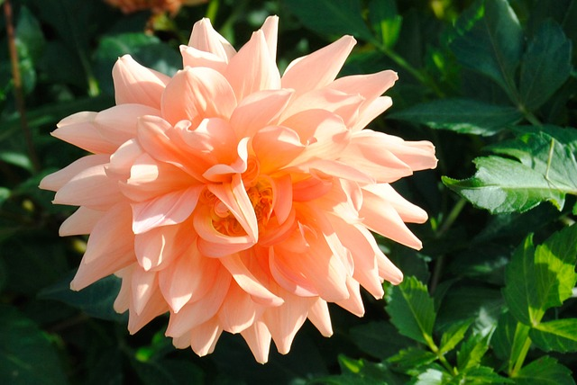 Free flower nature garden orange summer flowers plant