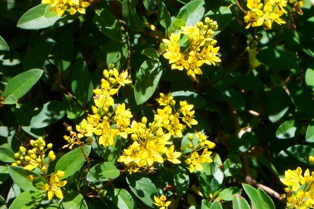 Free yellow flowers bunch bush green botanical garden