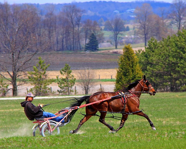 Free animal equine horse brown performance standardbred