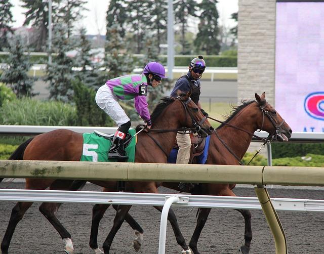 Free animal animals horse horses thoroughbred