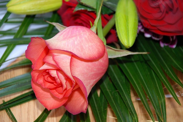 Free rose flower roses flowers pink pink rose summer