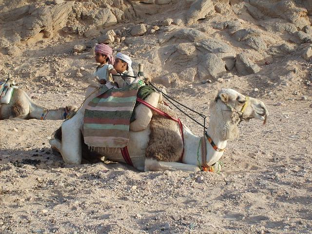 Free camel desert mountain baby egypt hot hurghada