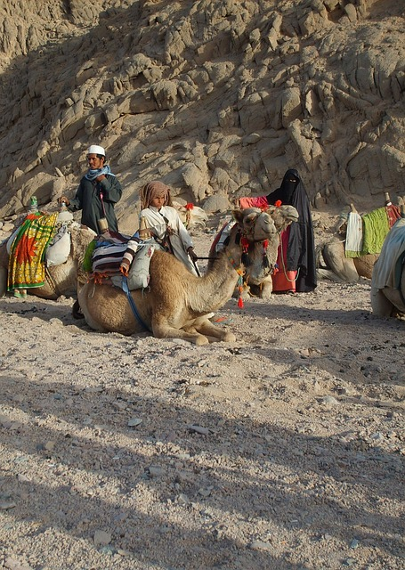 Free desert mountain baby egypt hot hurghada camel