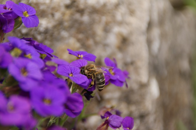 Free prost meal spring flowers bee sprinkle insect