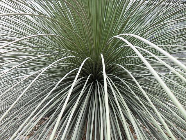 Free plant cactus long thin