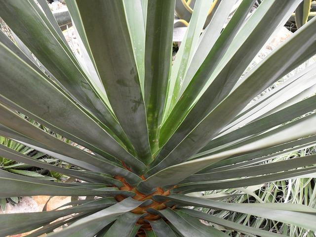 Free cactus plant green long thin