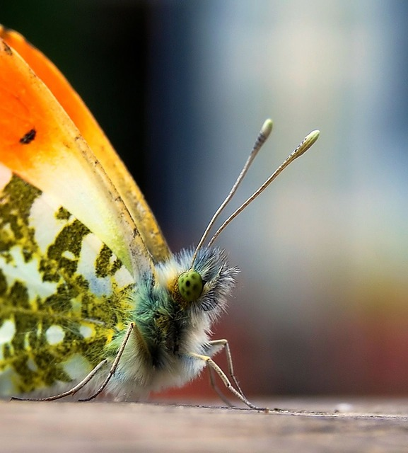 Free insect butterfly colorful probe macro