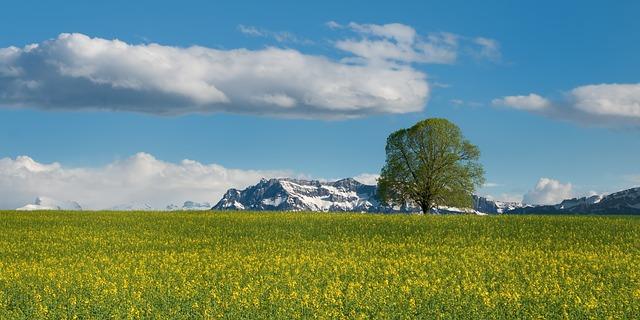 Free Photos:               tree field oilseed rape summer alpine switzerland | Ralf Kunze