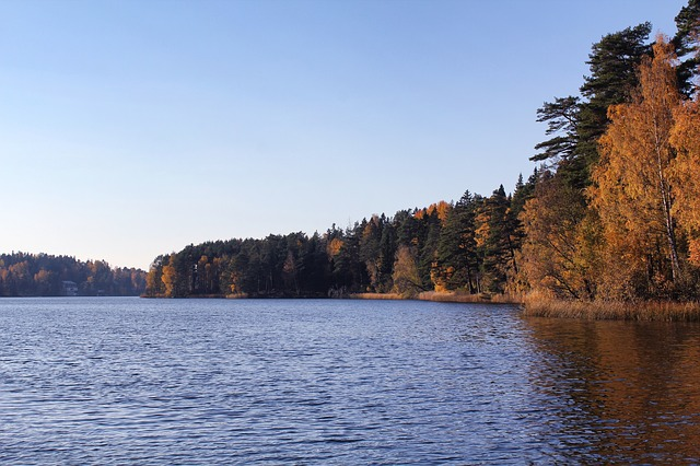 Free sweden forest trees woods fall autumn lake water