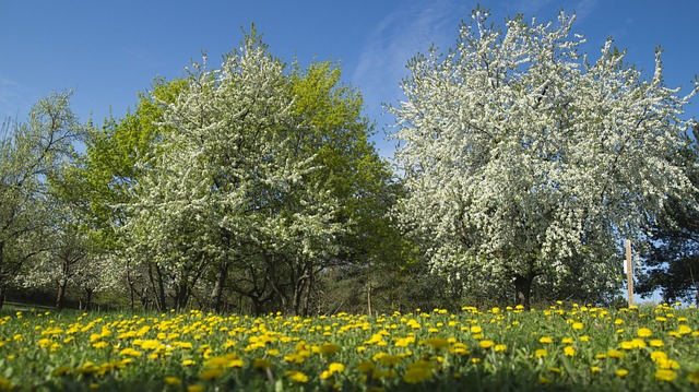 Free meadow flowers spring meadow flower landscape