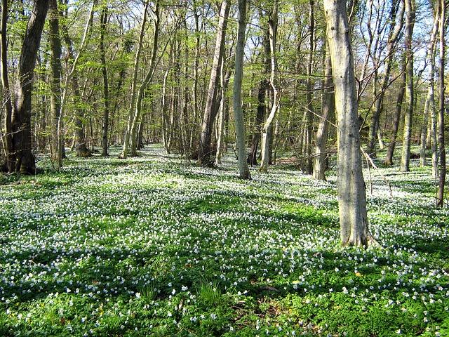 Free Photos: Denmark landscape forest trees woods wildflowers | David Mark