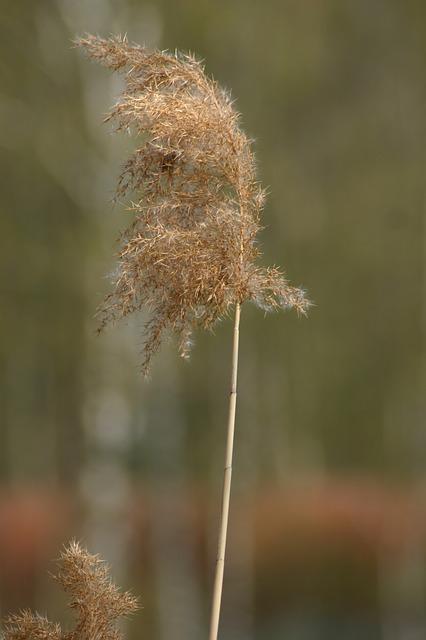Free moor moorland water waters wetland nature reed