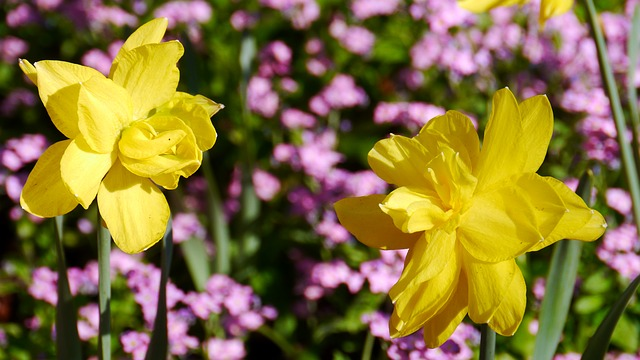 Free spring spring flowers sunshine
