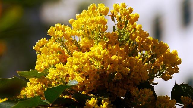 Free sunshine spring flower