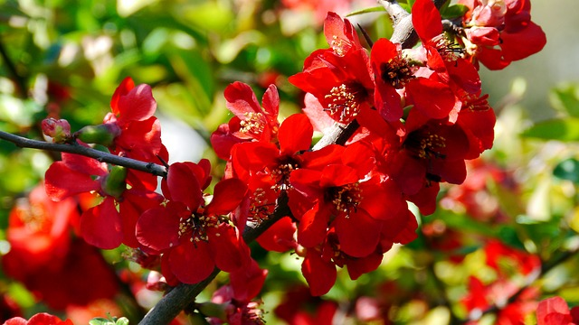 Free red flower spring sunshine