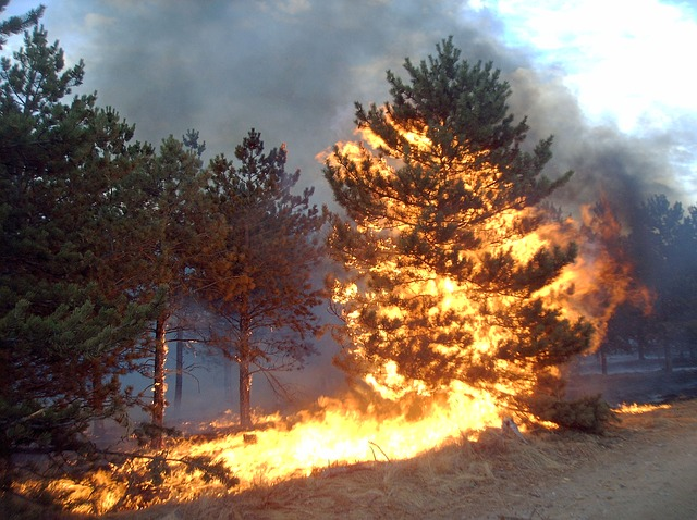 Free pine fire flare