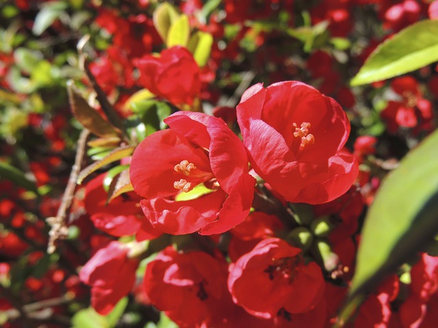 Free flower about red garden plant nature