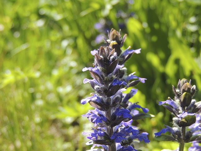 Free garden flower violet nature purple plant flora