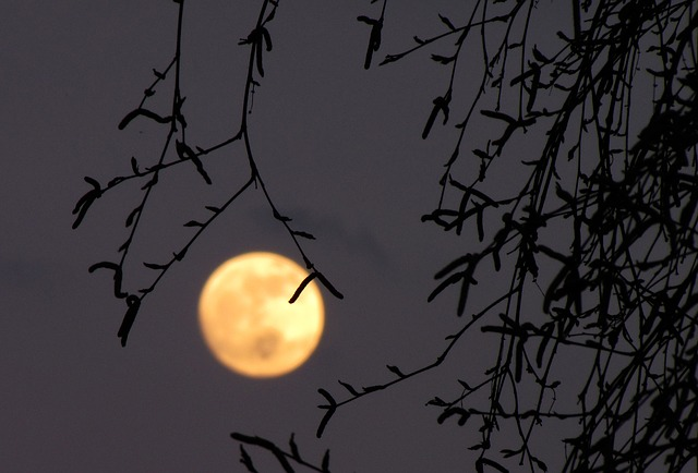 Free full moon moon birch dusk