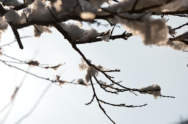 Free beijing spring flower snow