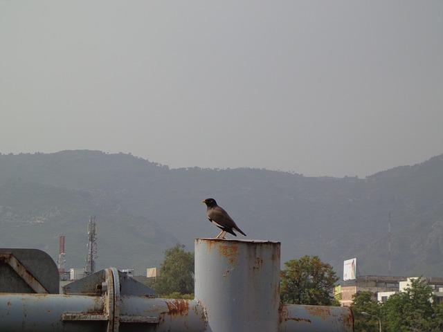 Free bird black bird crow