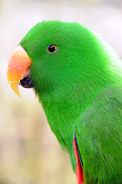 Free parrot birds parakeet plumage green colorful