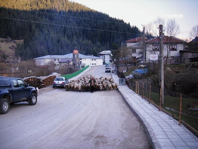 Free trigrad bulgaria village man sheep road mountains