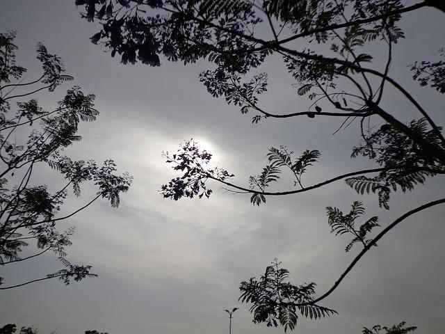 Free sun sunshine trees branches