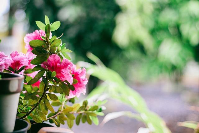 Free balcony flower plant light window
