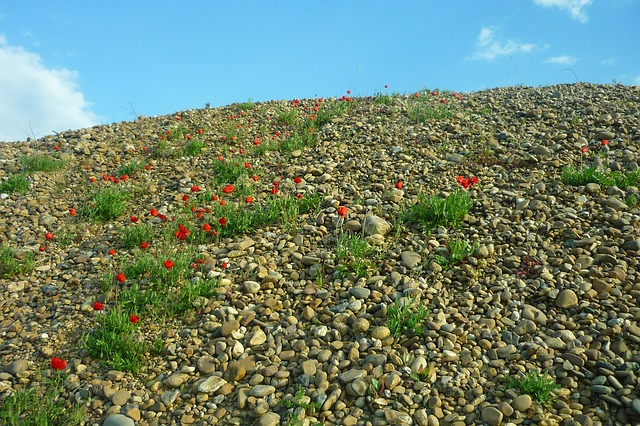 Free gravel pit poppies red flowers stones collection