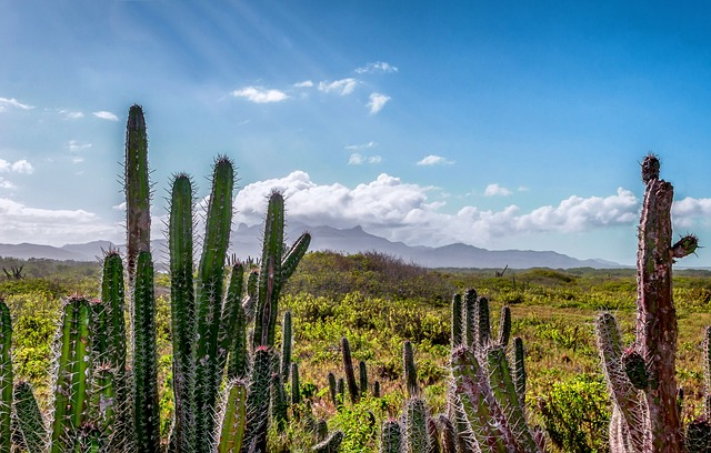 Free venezuela landscape scenic cactus cacti mountains