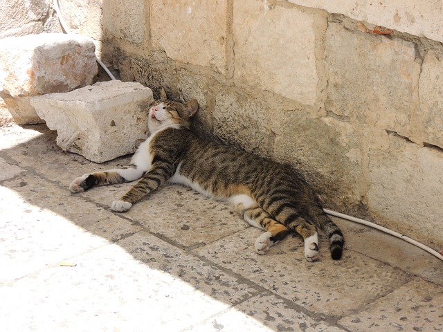 Free croatia dubrovnik city cat sleep are rest beast