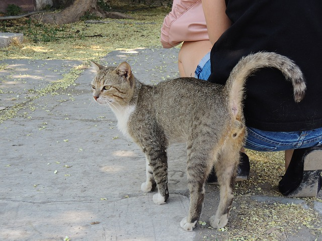 Free turkey izmir cat tigercat alley cat cat face