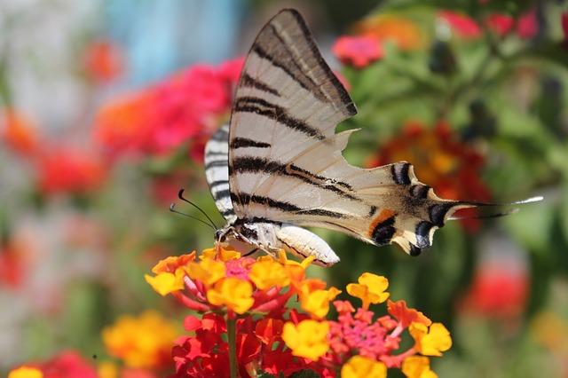 Free butterfly flower spring butterflies flowers