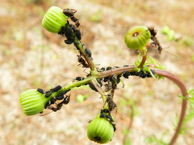 Free insects plant green ants