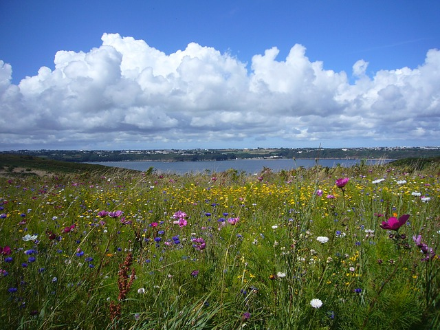 Free landscape flowers summer meadow clouds panorama