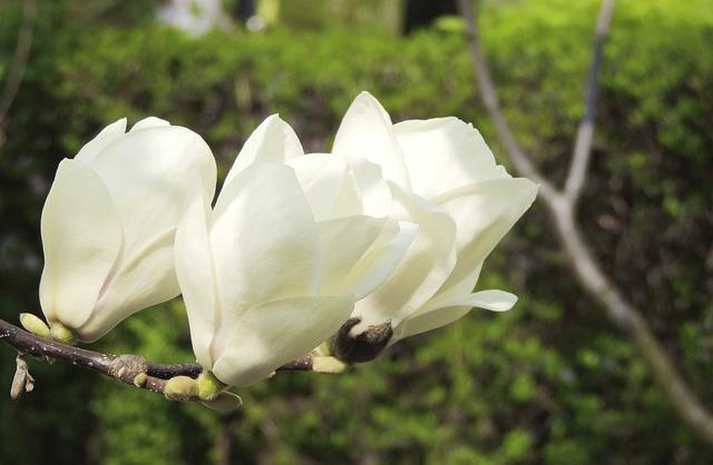 Free flower white plant nature spring