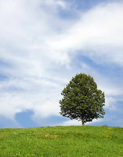 Free tree lonely meadow landscape summer sky alone