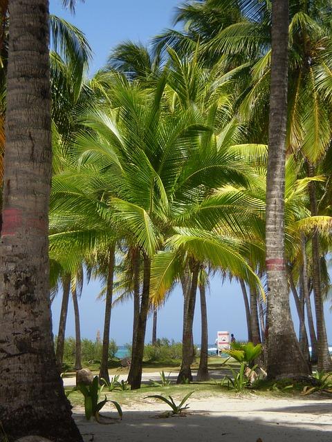 Free palmas landscape colombia san andrés islands