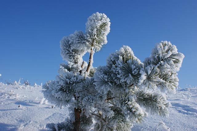 Free winter snow cold white blue sky